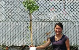The Perfect Occasion to Plant a Tree in Dorval