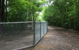 Committee being formed for new dog park in Beaconsfield