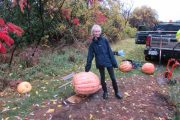 Great Baie D'Urfé pumpkin weighs in at 110 pounds