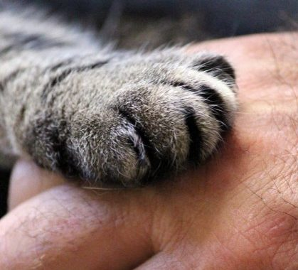 Coping Tips to Help You Deal with the Loss of Your Pet