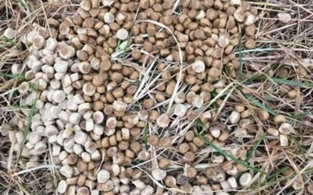 Possible contaminated kibble placed at the entrance to Angell Woods in Beaconsfield