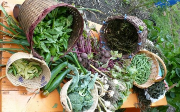 St-Columba by the Lake's community garden springs to life