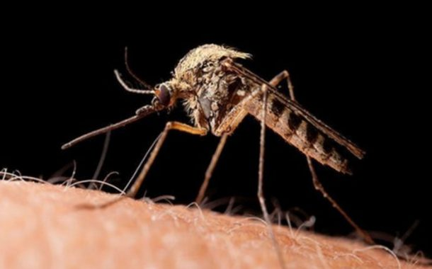 Mosquitoes have taken full advantage of floodwater