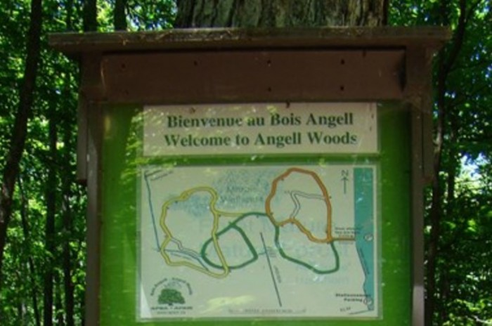 Beaconsfield to try a fungus to fight ash borer in Angell Woods