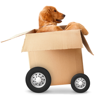 Moving day anxiety? We can help get you prepared for moving madness on July 1