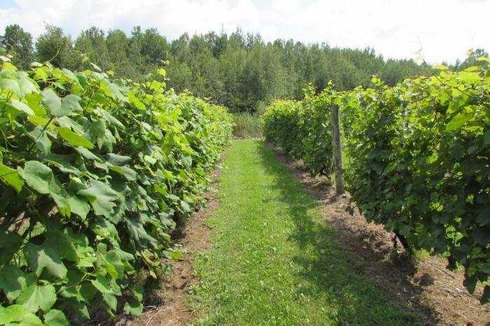 Vignoble Côte de Vaudreuil