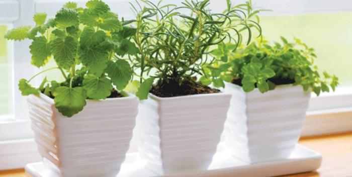 Cameron MacDonald, Garden tipsX Herbs, Pointe Claire Nursery,Pointe Claire Plaza,Rhonda Massad, West Island Blog
