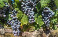 Celebrating Quebec Wines