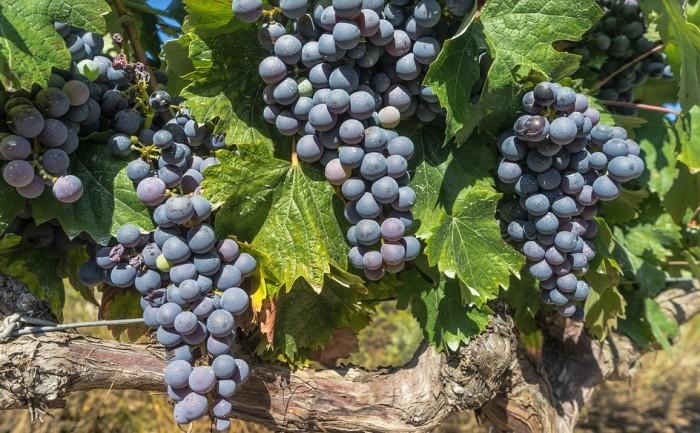 Quebec Wines, West Island Blog, Rhonda Massad,Denise K. Pereira,L'Orpailleur Blanc 2015, Domaine St-Jacques Sélection Rouge,Montérégie, Dunham