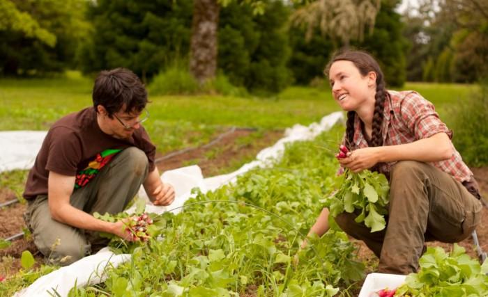 Sainte Anne De Bellevue, West Island Blog, West Island News, Rhonda Massad, McGill University, Agriculture