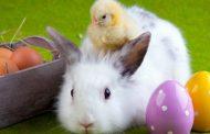 Good animal care begins with responsible pet ownership - Scarpaleggia