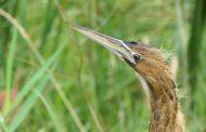 Le Nichoir Bird Conservation Center Hosts First Open House