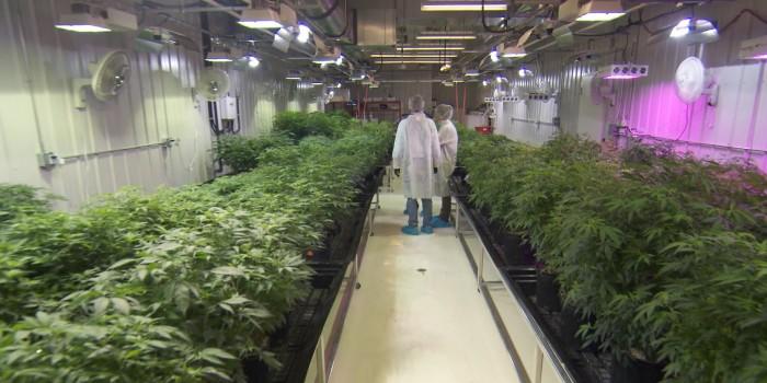 Aurora Cannabis, Rhonda Massad, Aurora Vie, Medical Cannabis