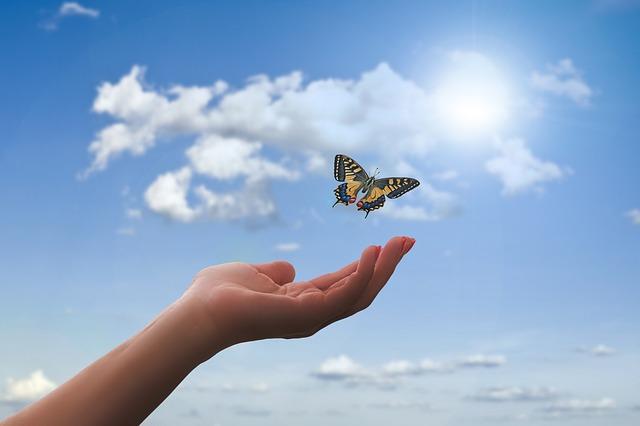 Butterfly release memorial