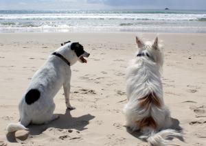 Pet Corner West Island Blog, Dog