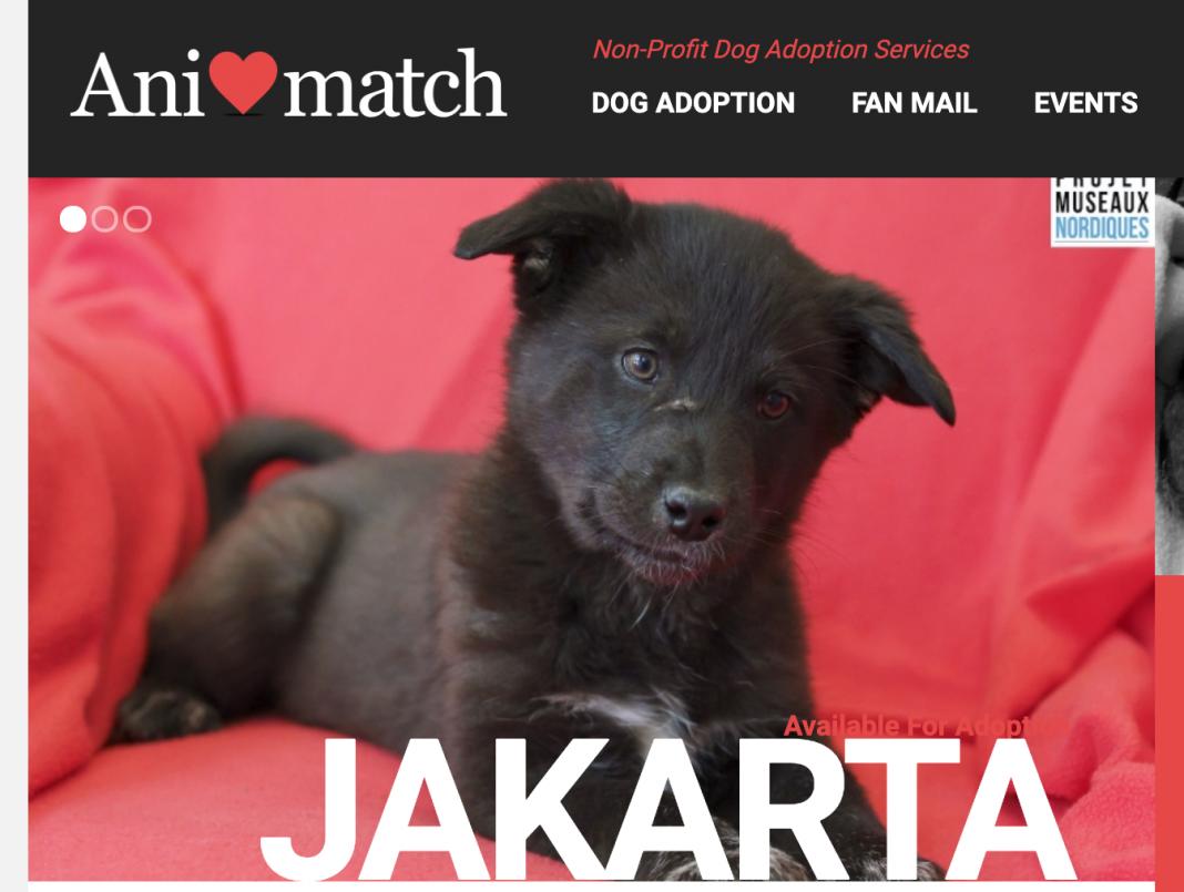 Animatch dog adoption January 2020