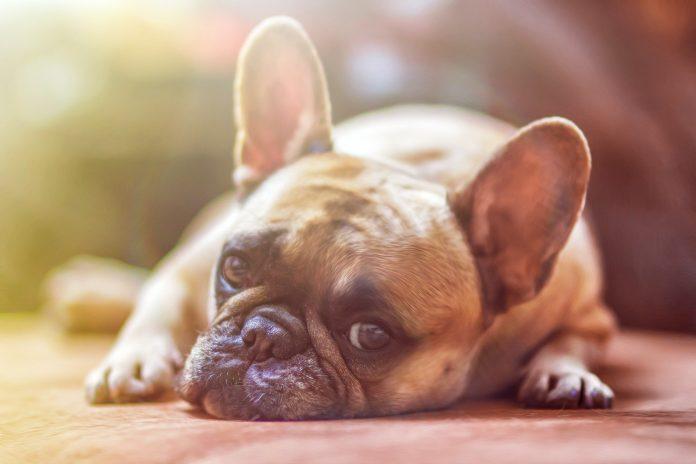 endangering dog's health