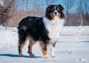 Lulu dog
