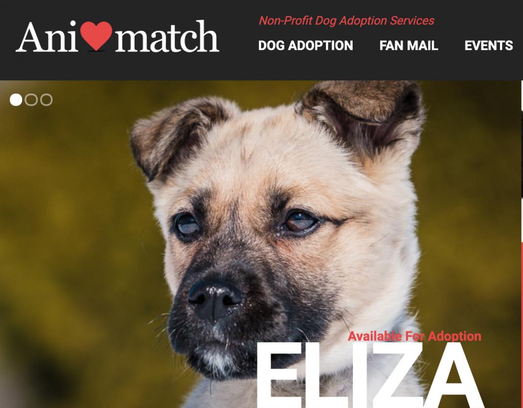 March dog adoption