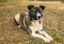 Bucky Animatch Dog Adoption May 2020