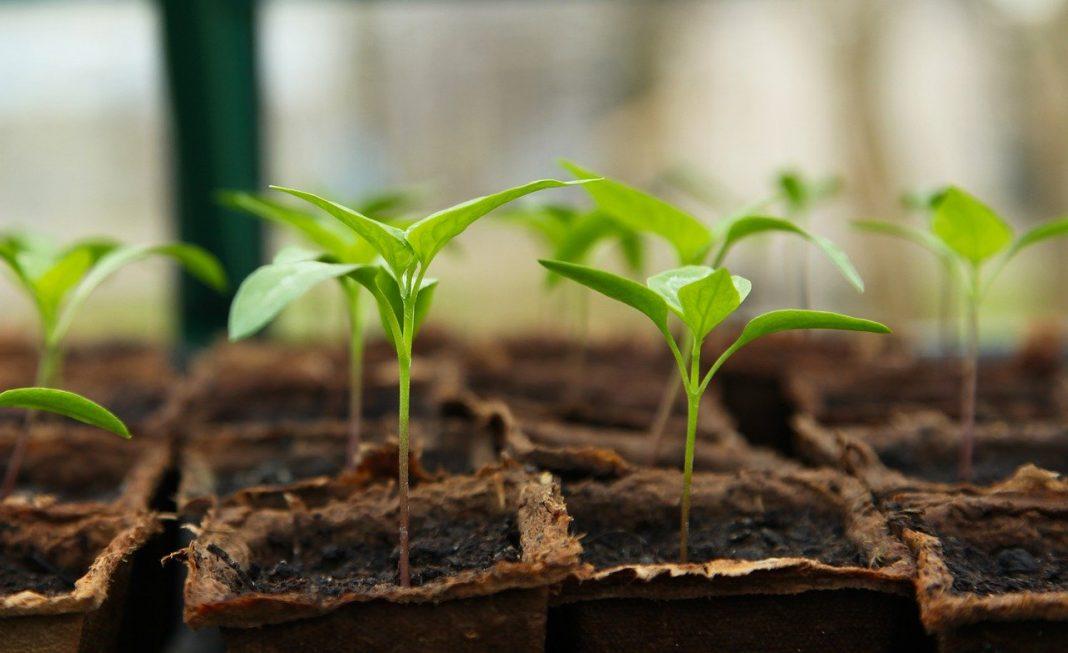 How to Start a Summer Garden