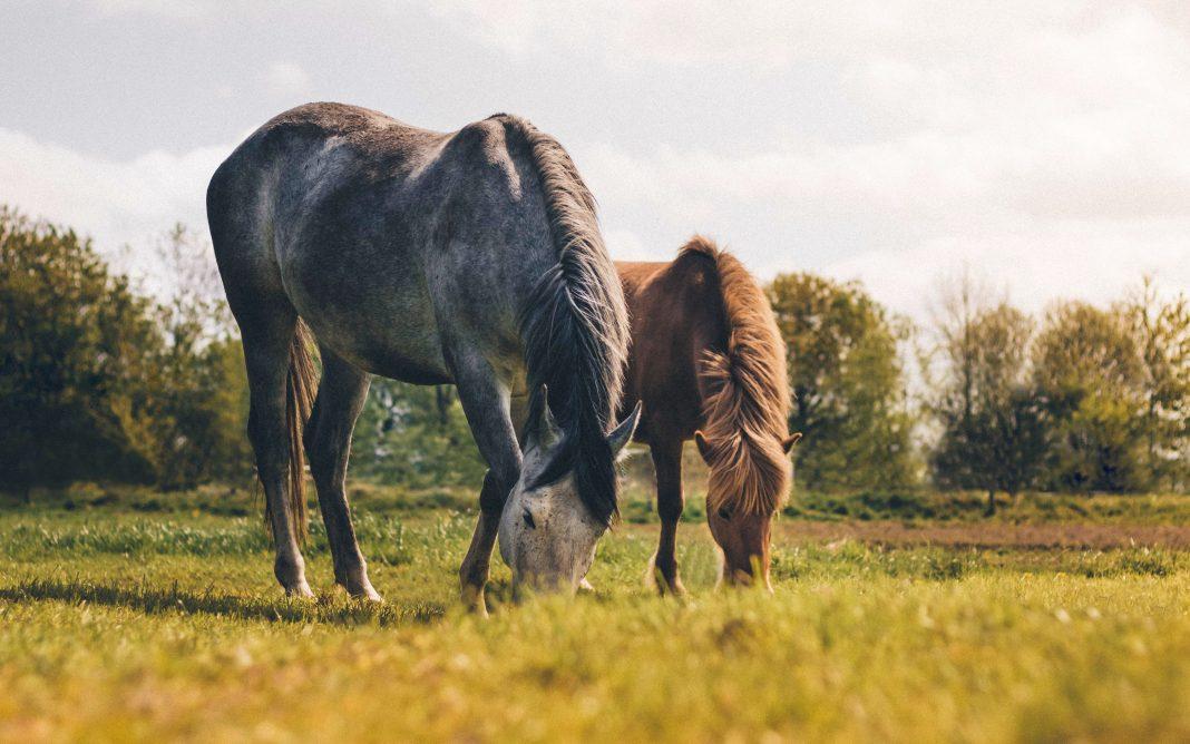horse farm animals