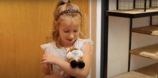 Ecomuseum lost stuffed animal fox