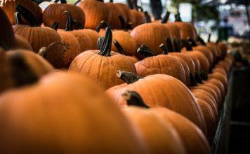 halloween-pumpkin-treats-freddie-collins-771yhlz2jI-unsplash-4-rows-of-pumpinks-on-market-display-foregroud-out-of-focus-