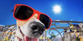 dog in sun glasses. canva