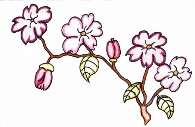 Zach_Designs_Plum_blossoms_Card_Design