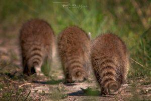 Montreal-Technoparc-wildlife-10-Foto-Yoto