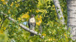 Technoparc-Oiseaux-wildlife-10-eddy-Daniel-Hamel
