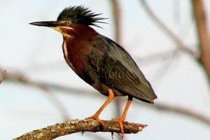 Technoparc-Oiseaux-wildlife-11-Graham-Eady