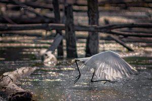 Montreal-Technoparc-wildlife-2-Foto-Yoto