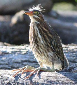 Technoparc-Oiseaux-wildlife-3-Graham-Eady