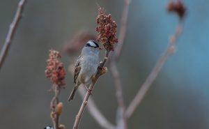 Technoparc-Oiseaux-wildlife-4-Daniel-Hamel