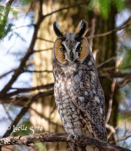 Technoparc-Oiseaux-wildlife-4-Lucille-Shiro