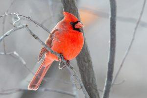 Technoparc-Oiseaux-wildlife-5-Daniel-Hamel