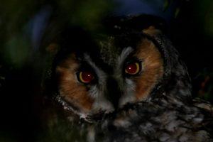 Technoparc-Oiseaux-wildlife-5-Graham-Eady