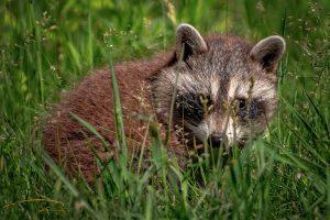 Montreal-Technoparc-wildlife-6-Foto-Yoto