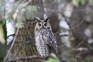 Technoparc-Oiseaux-wildlife-6-Graham-Eady