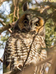 Technoparc-Oiseaux-wildlife-7-Daniel-Hamel