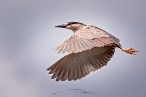 Montreal-Technoparc-wildlife-7-Foto-Yoto