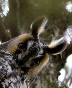 Technoparc-Oiseaux-wildlife-7-Graham-Eady
