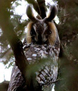Technoparc-Oiseaux-wildlife-9-Graham-Eady