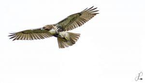 Technoparc-Oiseaux-wildlife-Jonathan-Poissant-eddie-1