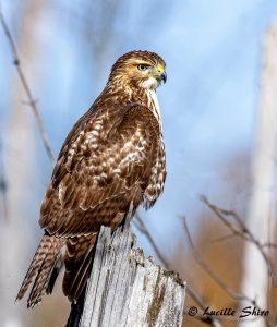 Technoparc-Oiseaux-wildlife-Lucille-Shiro-eddie-1
