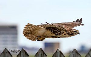 Technoparc-Oiseaux-wildlife-Lucille-Shiro-eddie-2