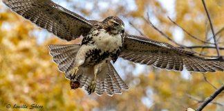 Technoparc-Oiseaux-wildlife-Lucille-Shiro-eddie-3