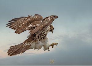 Technoparc-Oiseaux-wildlife-Foto-Yoto-eddie-4